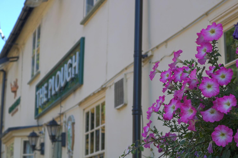 The Plough - Outside Flower Shot